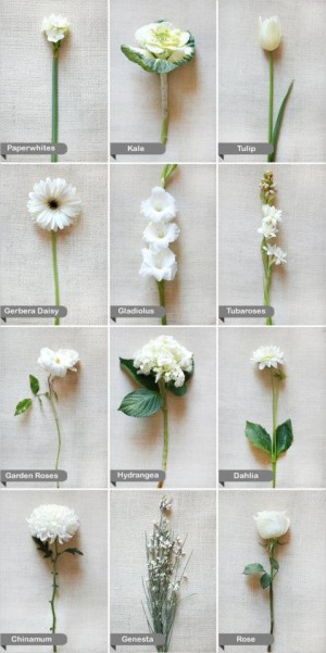 What flower is that andreacrawfordflowers white mightylinksfo