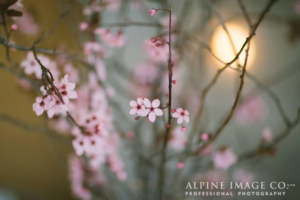 Alpine 8